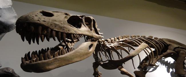 kostra dinosaura v múzeu prírodovedných vied