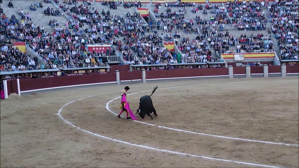 krátke video z býčích zápasov v Madride